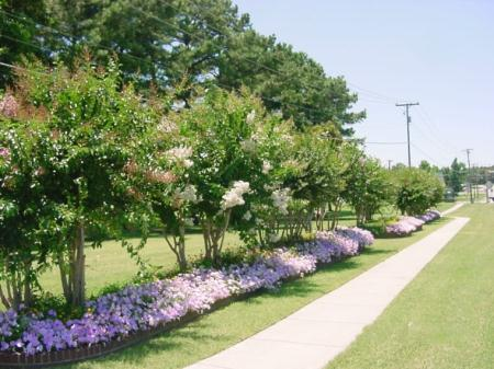 Walking Trail Next to Trees and Flowers